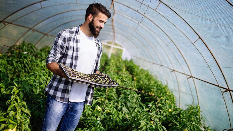 CHEMIA OGRODNICZA nawozy środki użyźniające środki ochrony roślin wyściółki, nasiona inne