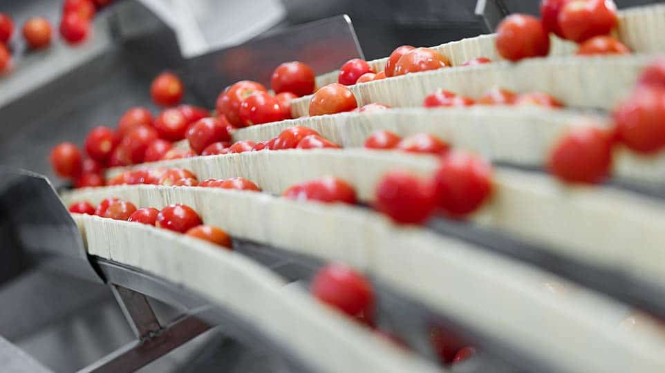 PRZETWORY OWOCOWO WARZYWNE dżemy i marmolady miody warzywa kiszone i solone sałatki owocowe i warzywne inne