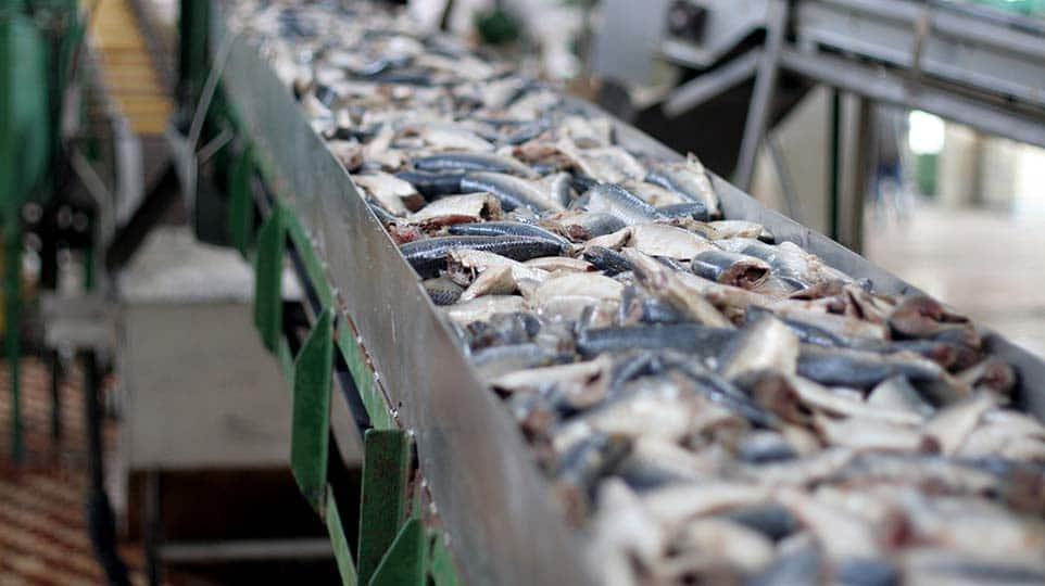 RYBY I PRZETWORY RYBNE ryby solone ryby w zalewie ryby w innych sosach sałatki rybne inne